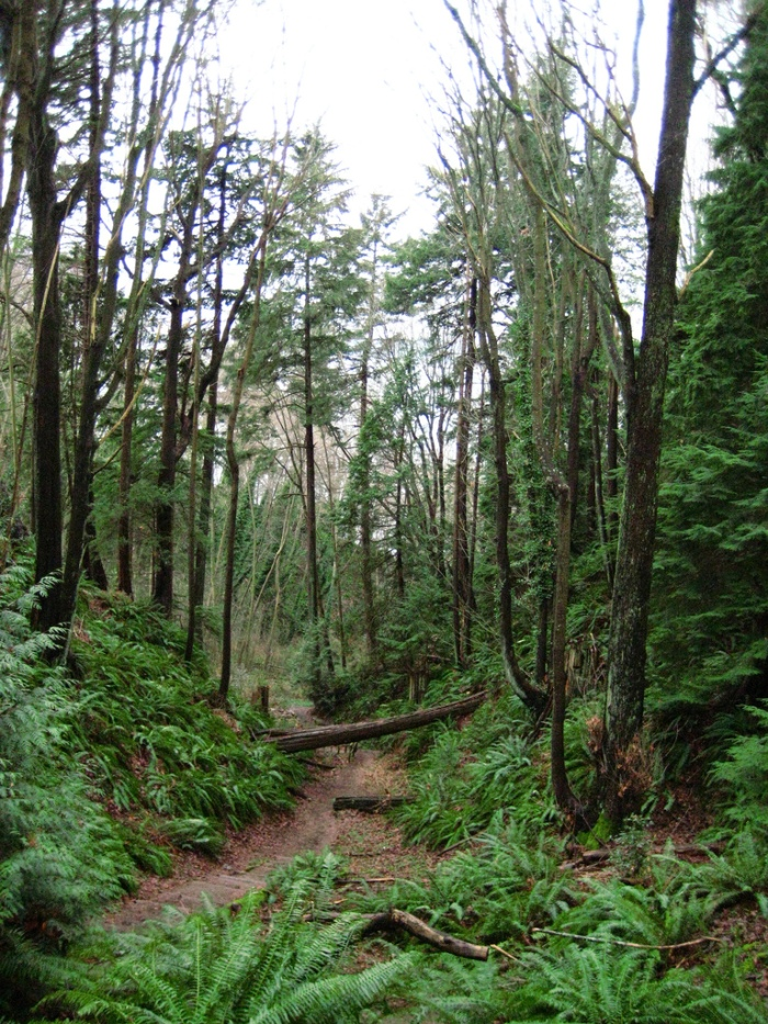 A view of the forest at Pacific Spirit Regional Park. (Metro Vancouver/University Endowment Lands, BC, Canada)