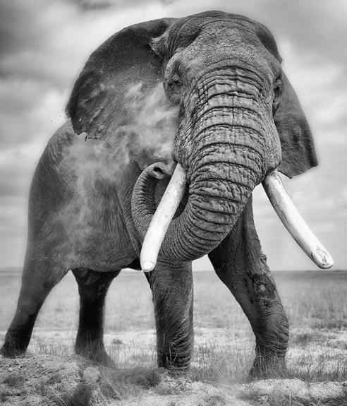 #ivoryfreecanada PR Image - Mark Drury