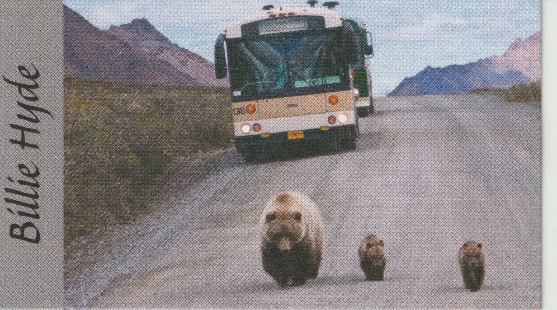 Bears and bus, Denali