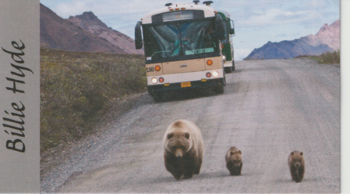 Bears and bus, Denali